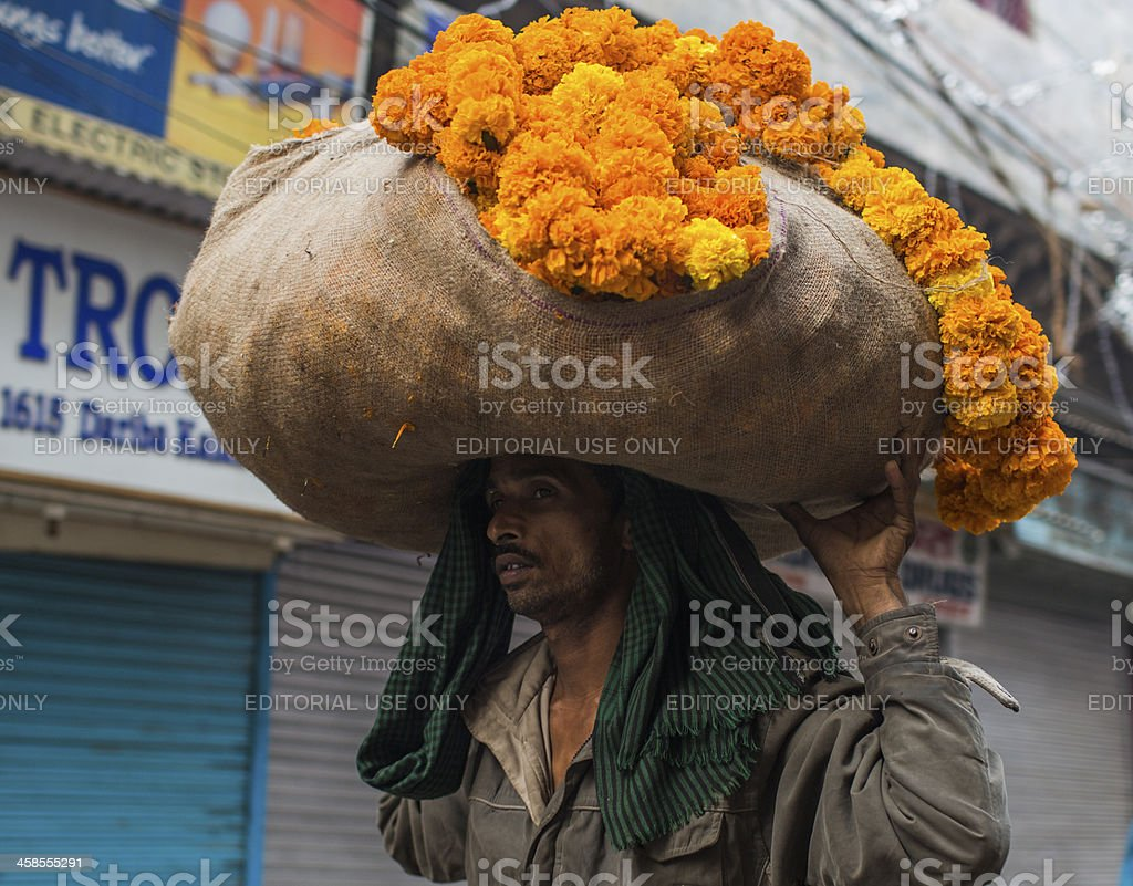 Indian labourer carries a sack of Marigold flower royalty-free stock photo