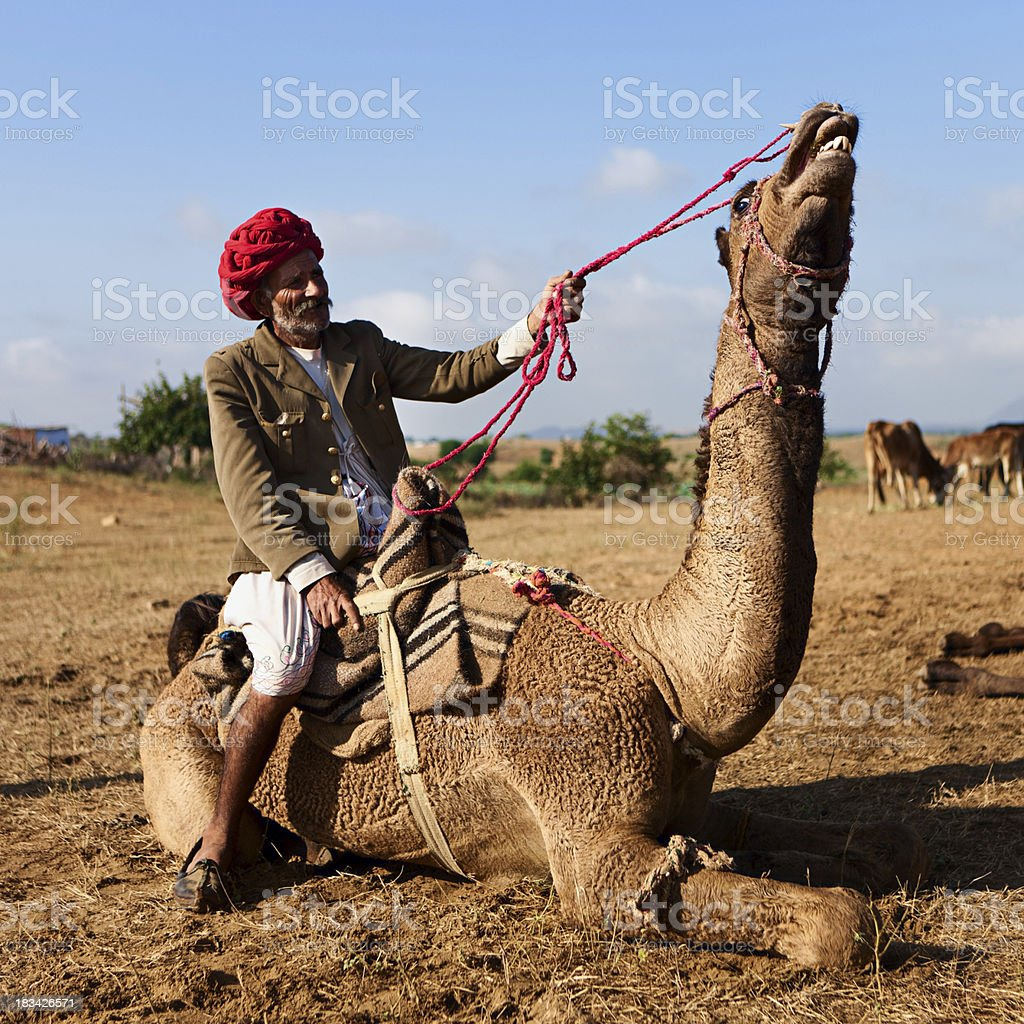 Indian man with a camel during festival in Pushkar stock photo