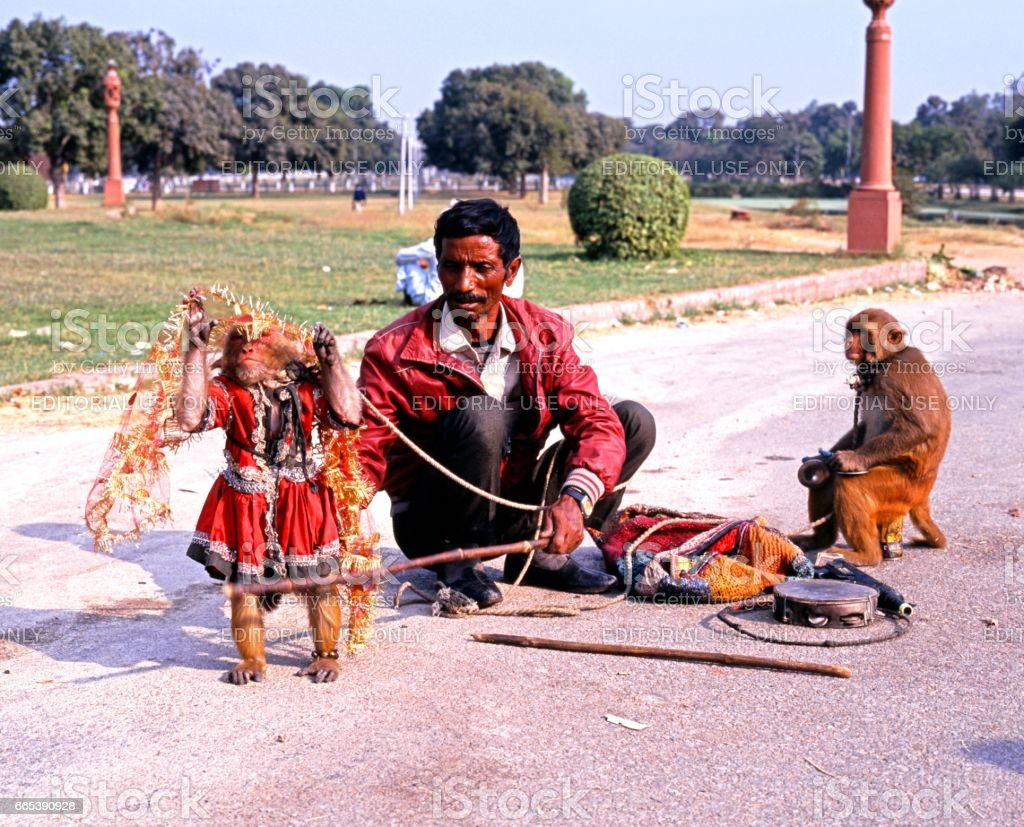 Indian man with performing monkeys, Delhi. stock photo