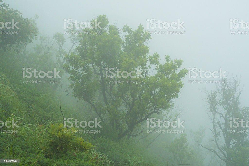indian monsoon 2016 stock photo