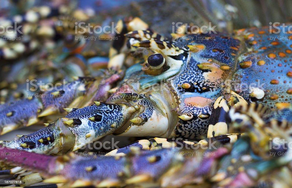 Indian Ocean Lobsters stock photo