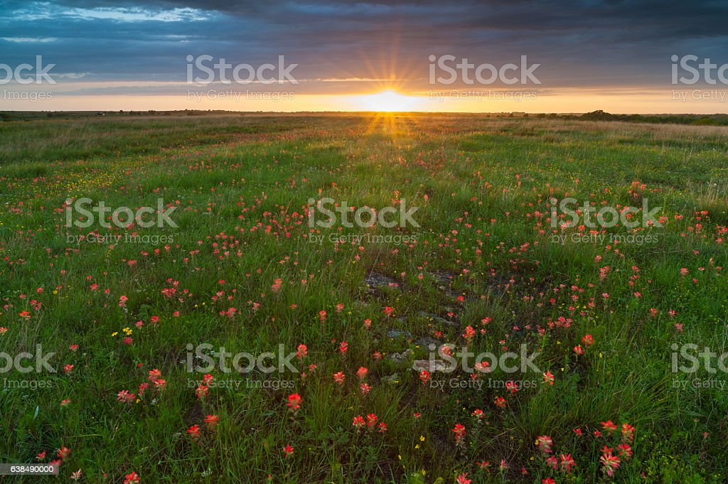 Indian Paintbrush, Clouds, and Sunset, Oklahoma stock photo
