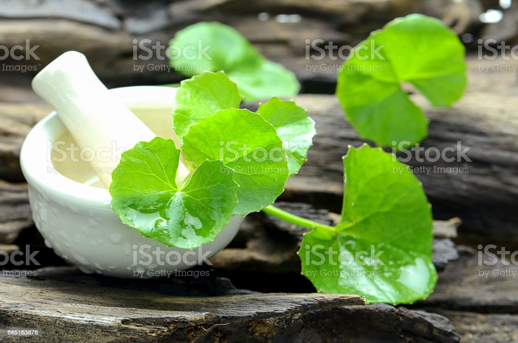 Indian pennywort, brain tonic herbal plant. stock photo
