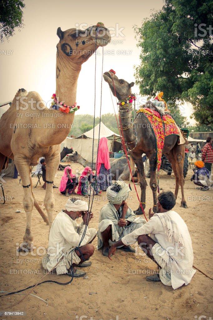 Indian Rajasthani rural men with their camels at Pushkar Camel Fair stock photo