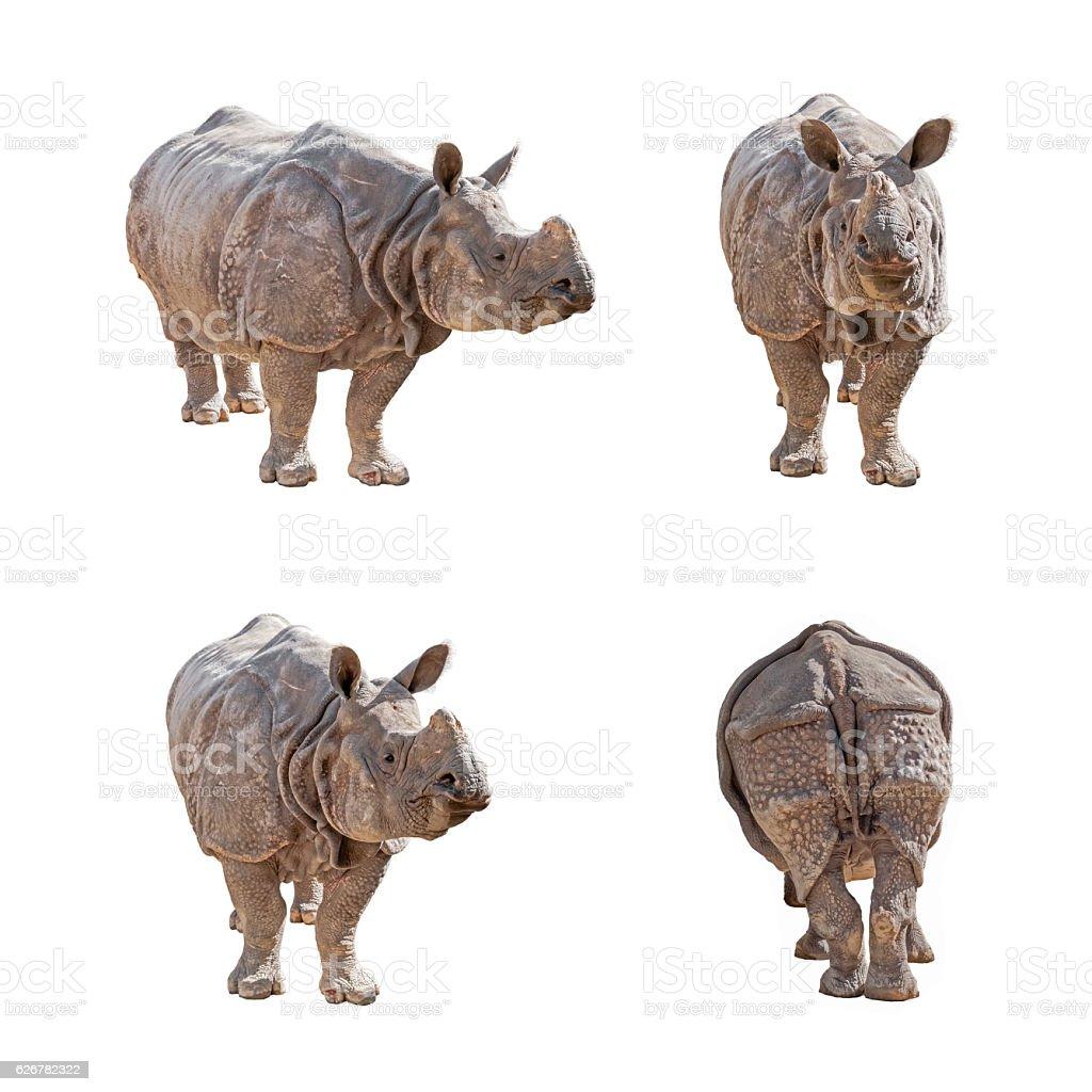 Indian Rhinoceros isolated on white background. stock photo