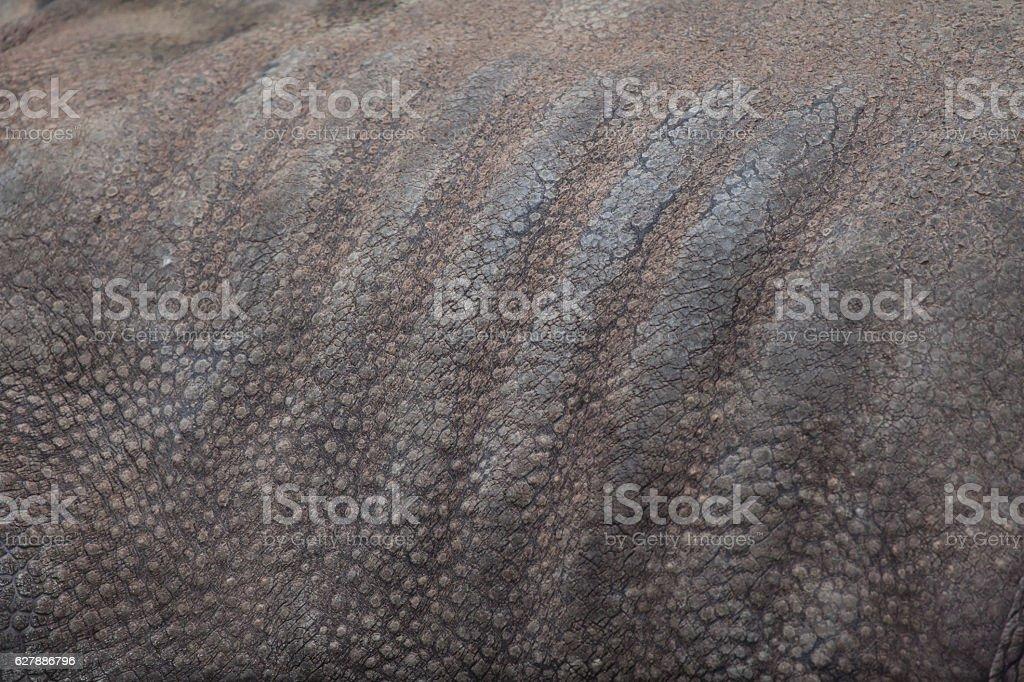 Indian rhinoceros (Rhinoceros unicornis). Skin texture stock photo