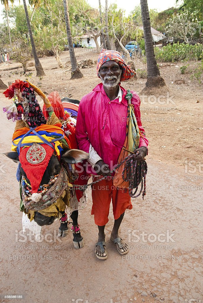 indian saddhu with a holy cow stock photo