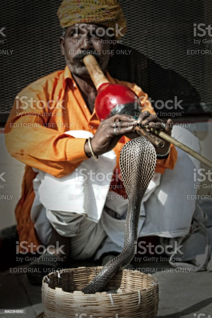 India, Jaipur - November 2009:Indian snake charmer playing the flute for the cobra in a basket standing in front of him stock photo