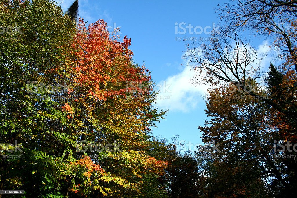 Indian Summer in Canada - Toronto royalty-free stock photo