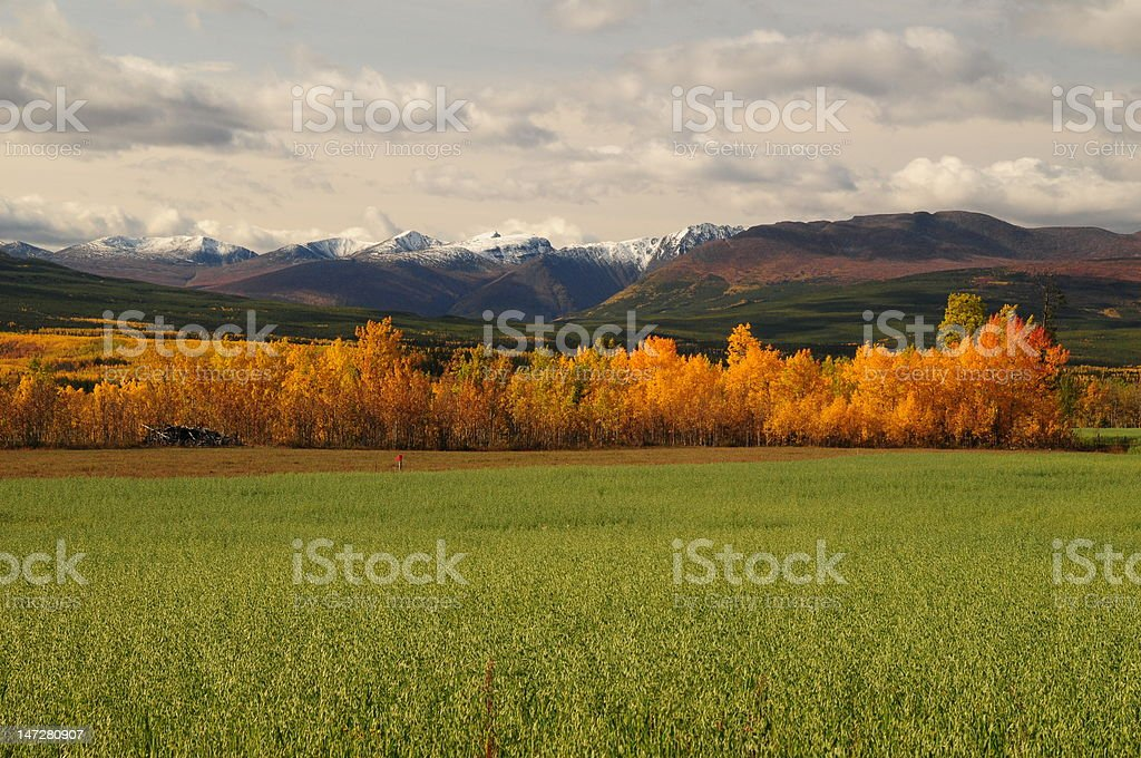 Indian Summer in Kanadas Yukon stock photo