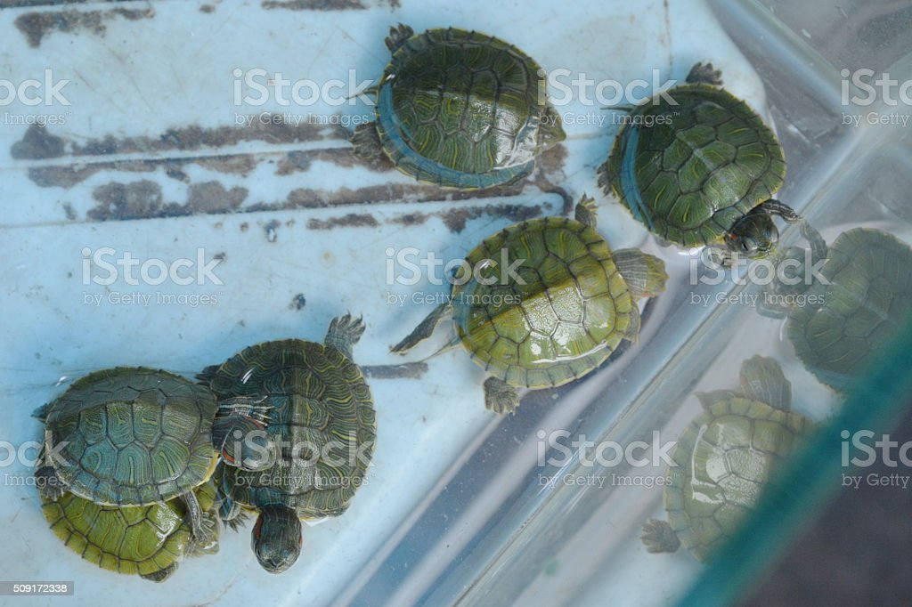 Indian turtle market stock photo