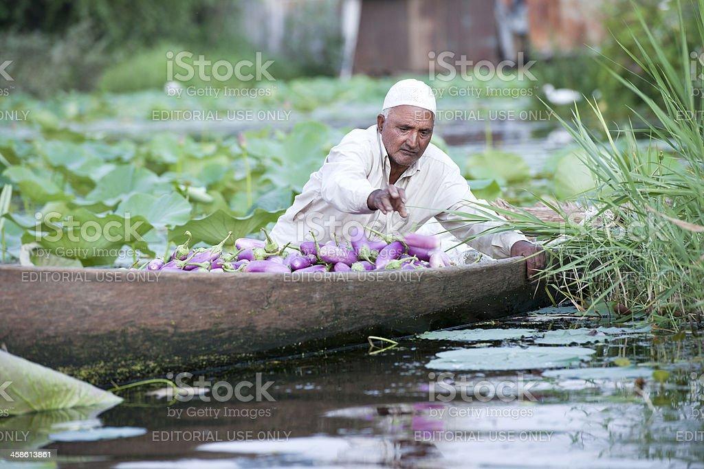 Indian with Eggplants in Shikara stock photo
