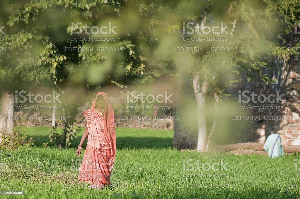 Indian woman wearing orange sari during farm work, India stock photo
