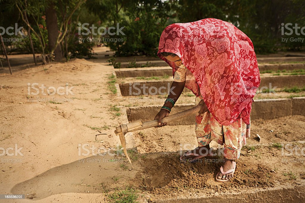 Indian woman working in the vegetable garden royalty-free stock photo