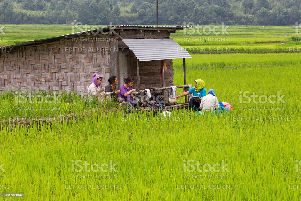 Indian women working on paddy field, India stock photo