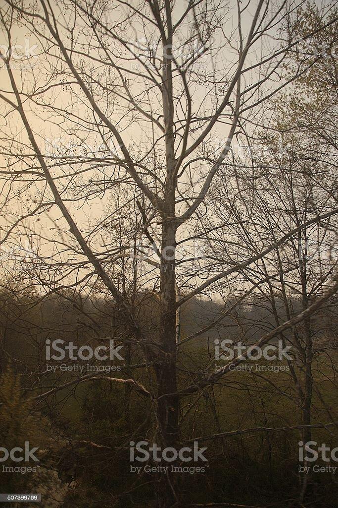Indiana trees stock photo