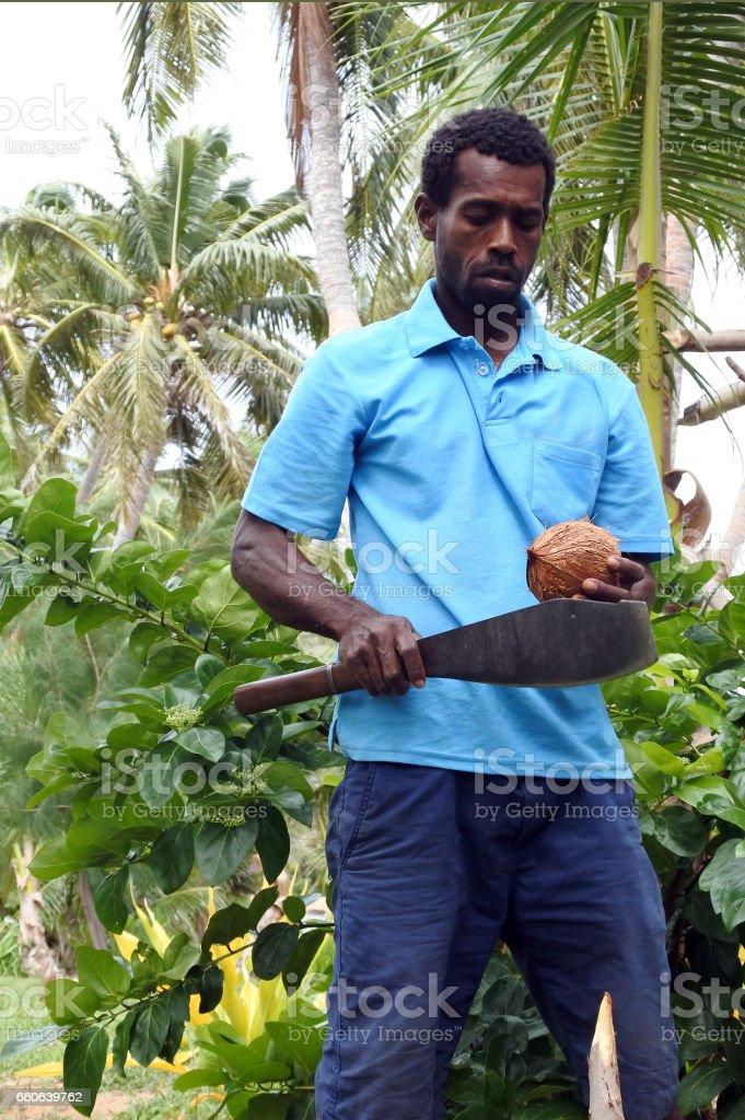 Indigenous Fijian man is about to open a coconut palm fruit in Fiji stock photo
