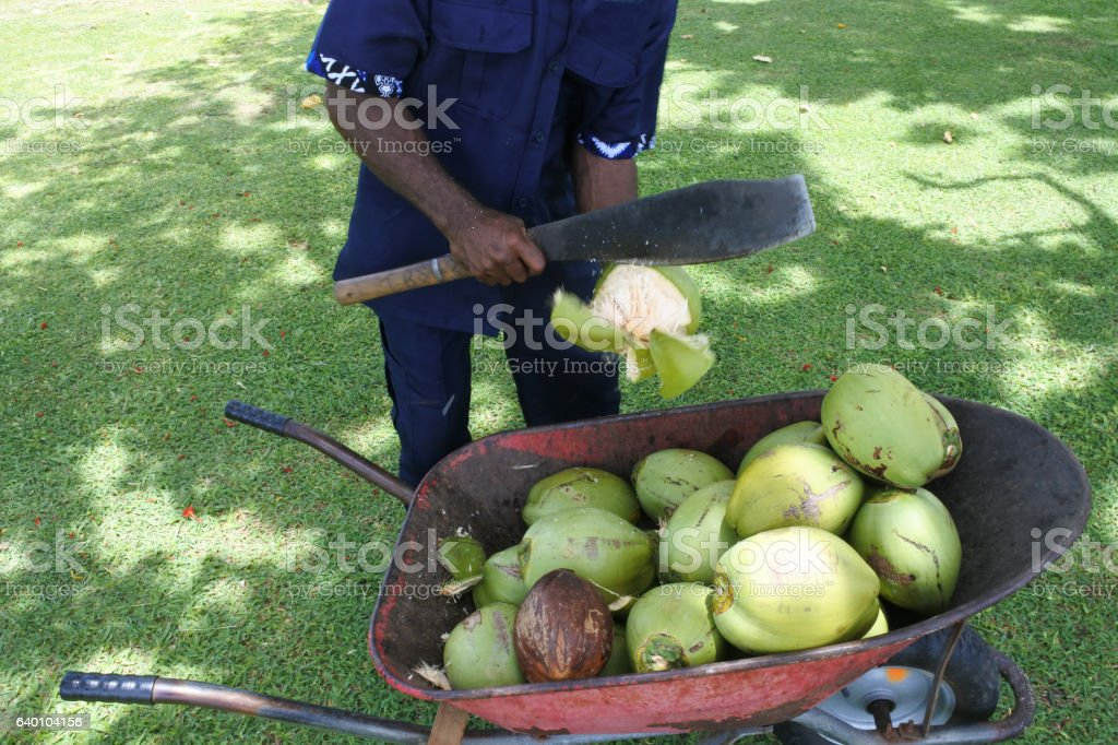 Indigenous Fijian man peels coconut stock photo
