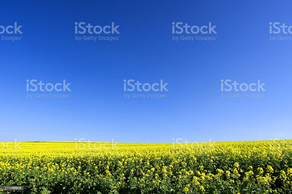 Indigo Blue Sky royalty-free stock photo