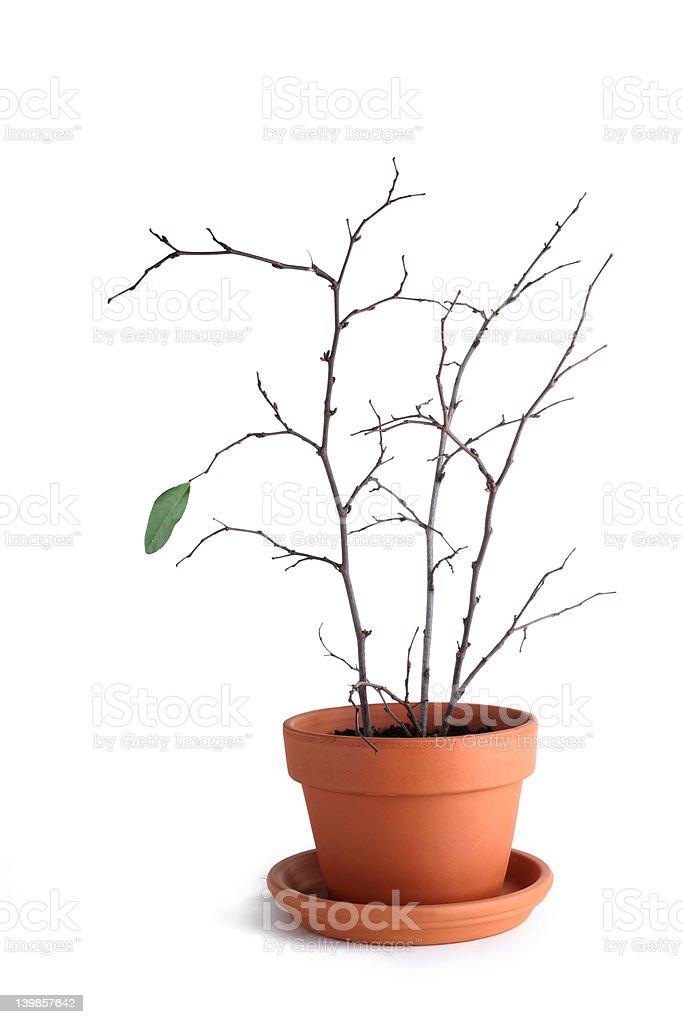 Individual Growth royalty-free stock photo