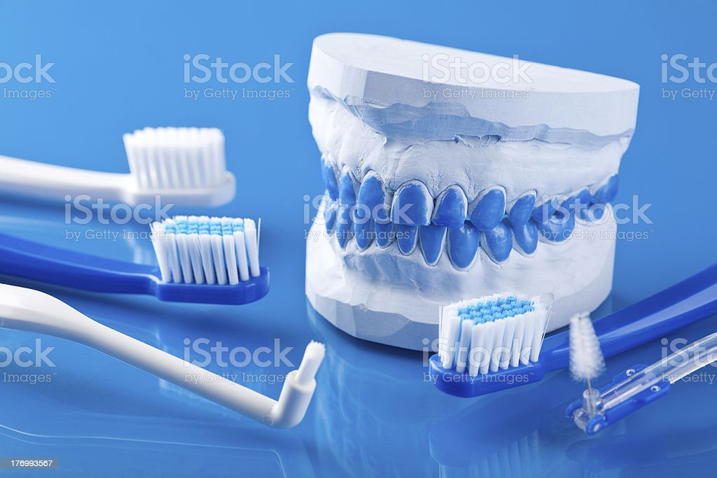 individual plaster dental molds and toothbrushes royalty-free stock photo