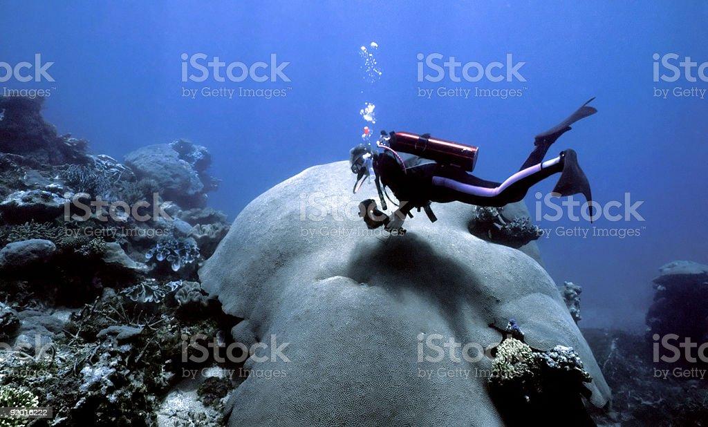 Indo Pacific Coral stock photo