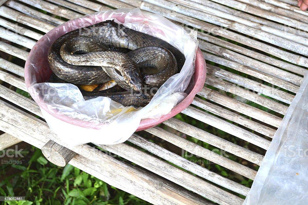Indochinese rat snake sale beside sidewalk market royalty-free stock photo
