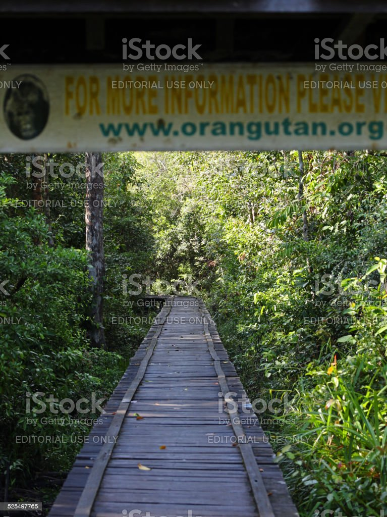 Indonesia: Camp Leakey in Borneo stock photo