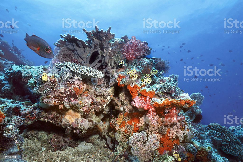 Indonesia Coral Reef stock photo