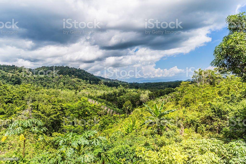 Indonesia Nature stock photo