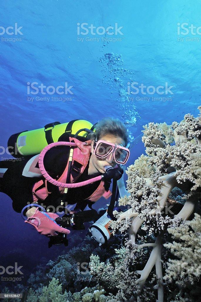 Indonésie Corail mou photo libre de droits