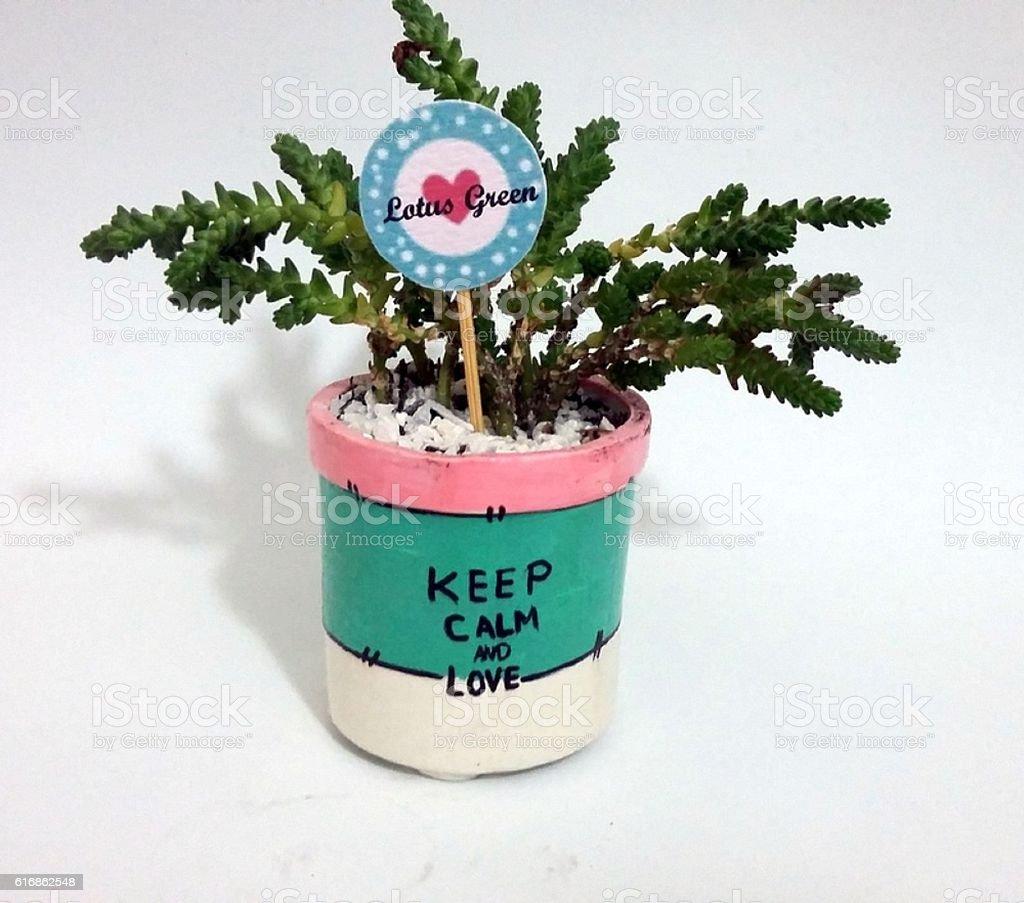 indoor decoration plants stock photo
