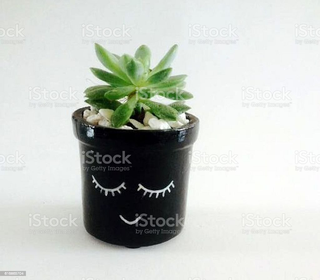 indoor decoration plants stock photo