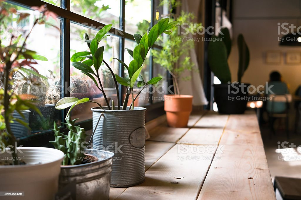 Indoor garden idea to with small plants near window stock photo
