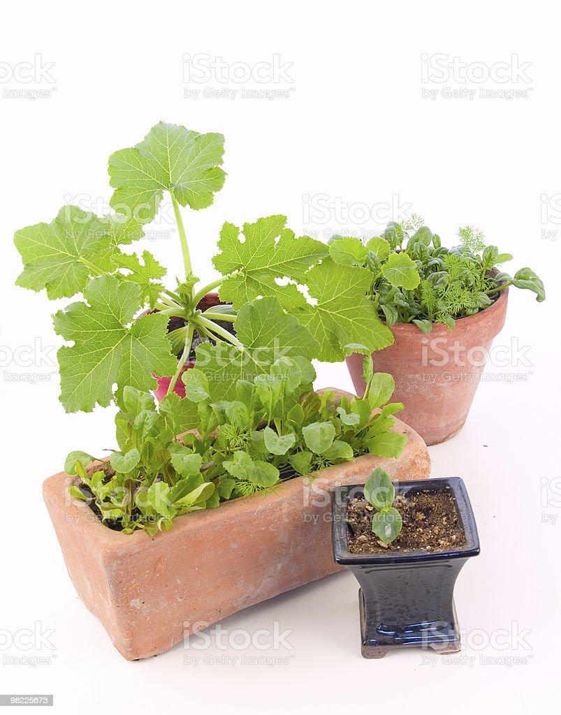 Indoor gardening royalty-free stock photo