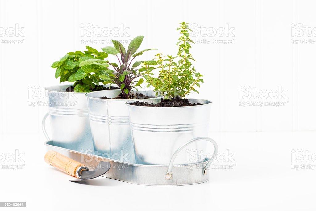 Indoor Herb Garden stock photo