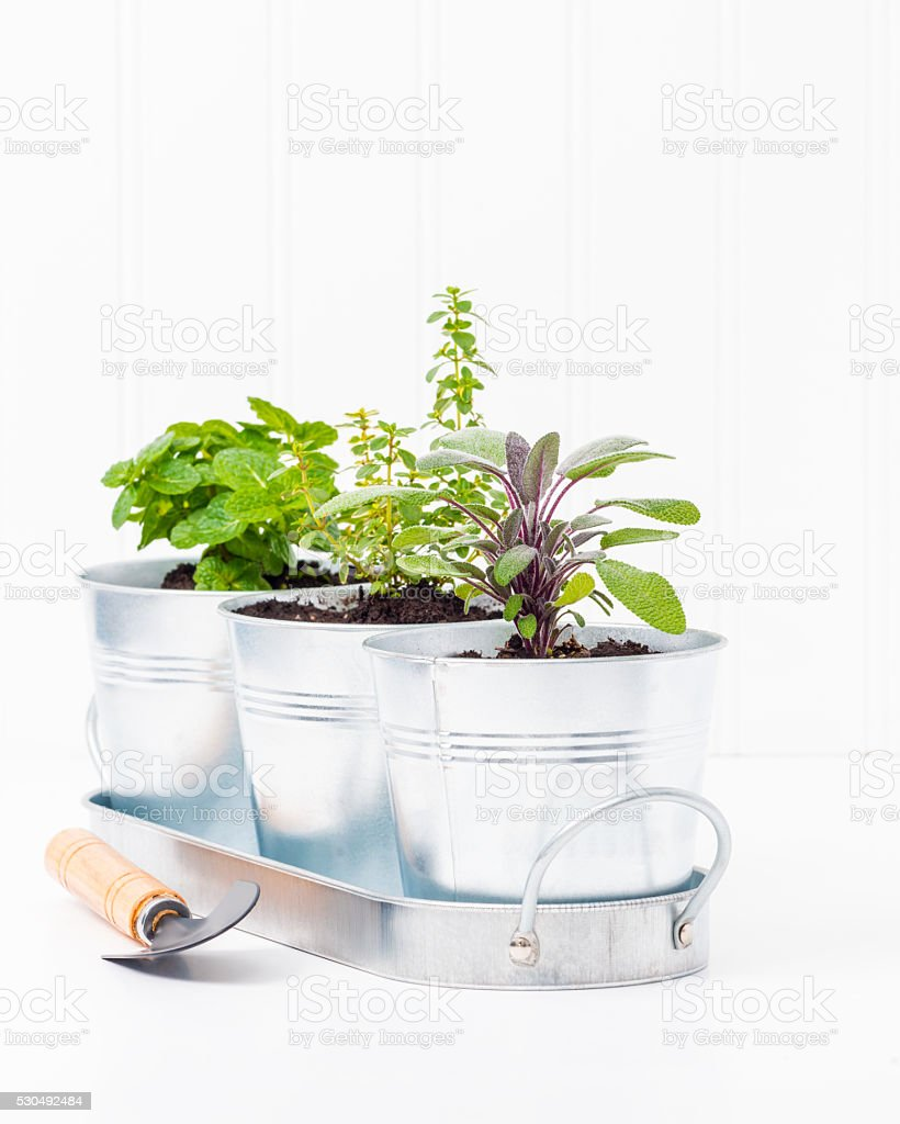 Indoor Herb Garden Portrait stock photo
