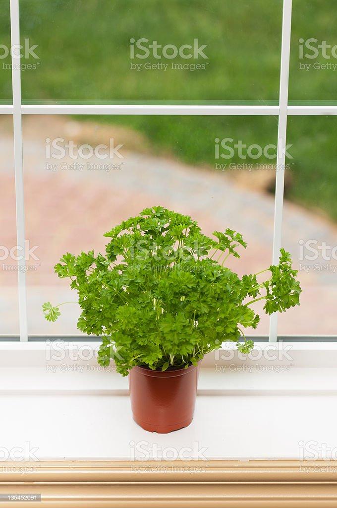 Indoor herbs garden royalty-free stock photo