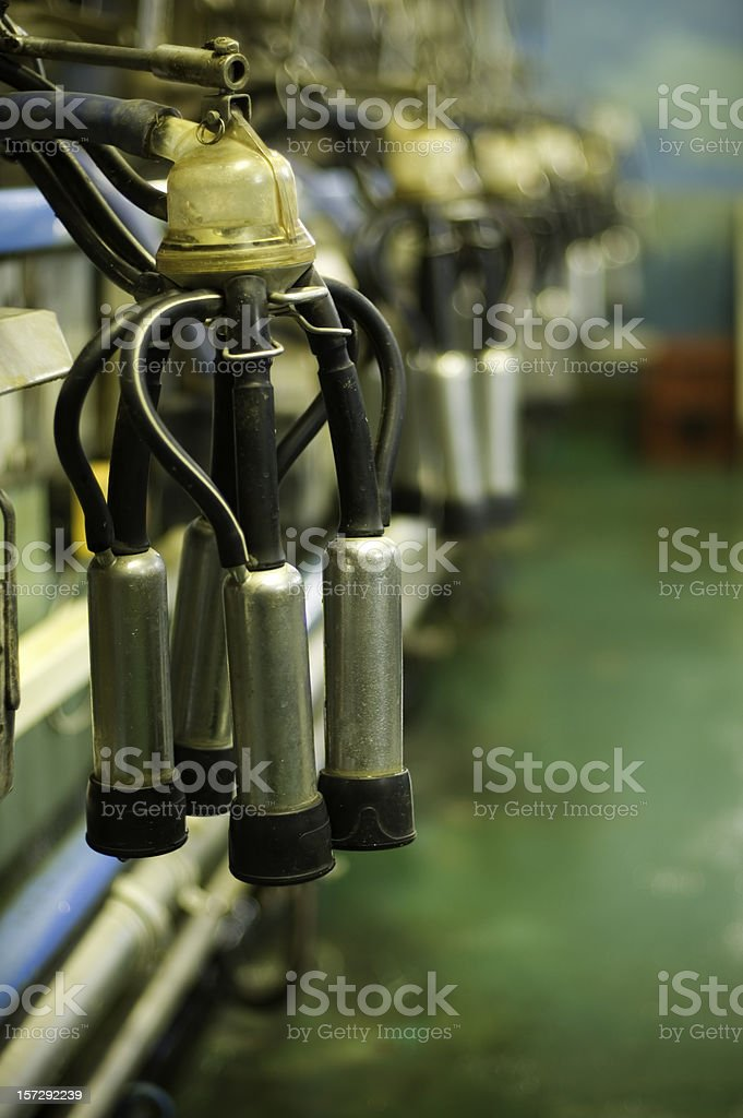 Indoor milk machine with four pipes, one for each udder stock photo