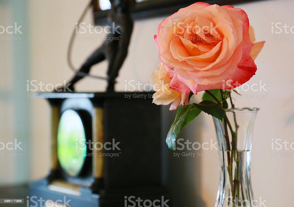 Indoor orange flower foto de stock libre de derechos