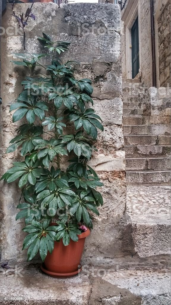 Indoor Outdoor Potted Plant, Stone, Brick, Stairs, Dubrovnik, Croatia City stock photo