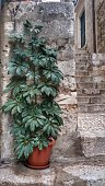 Indoor Outdoor Potted Plant, Stone, Brick, Stairs, Dubrovnik, Croatia City