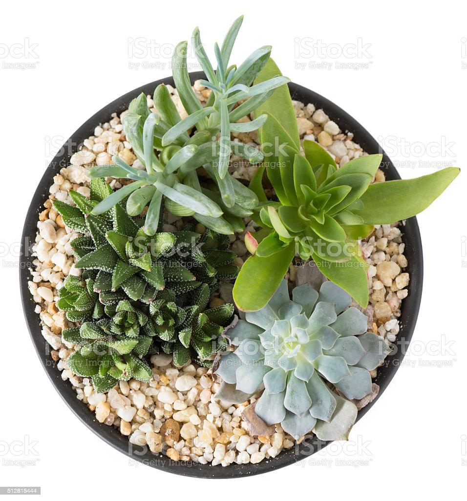 Indoor Plant Garden - Overhead stock photo