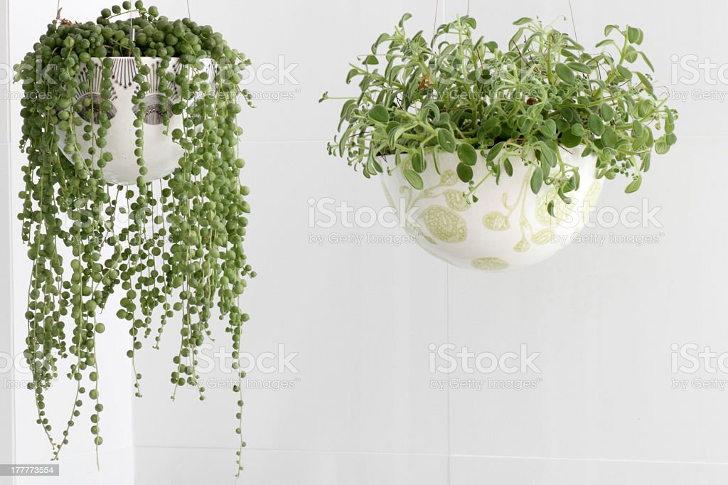 indoor plants stock photo