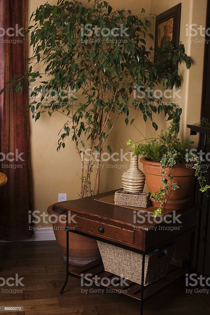 Indoor Tree royalty-free stock photo