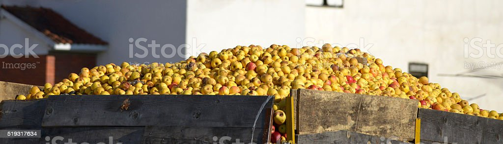 Industrial apples in a truck stock photo