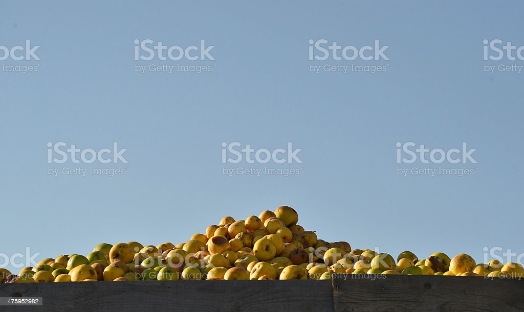 Industrial apples stock photo