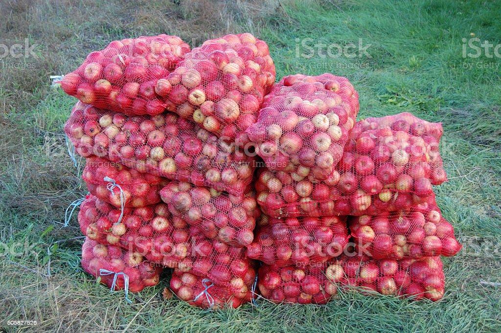 Industrial apples stock photo