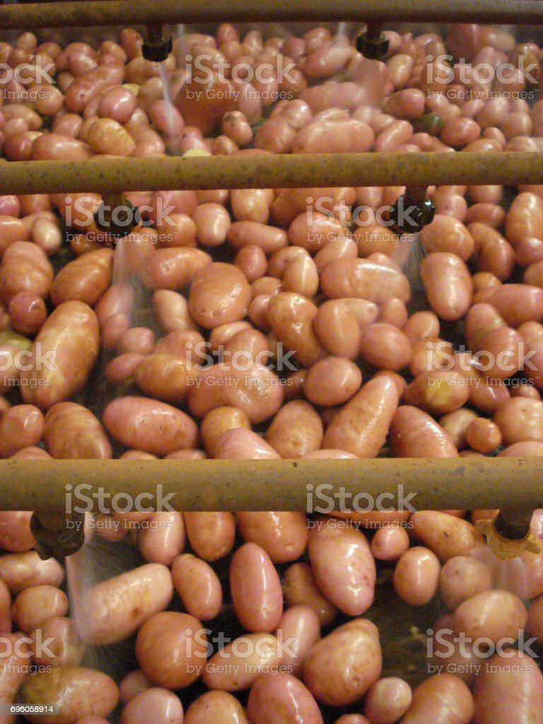 Industrial potato washing stock photo