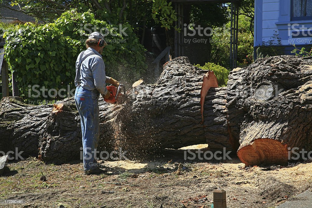 Industrial Strength Chainsawing stock photo